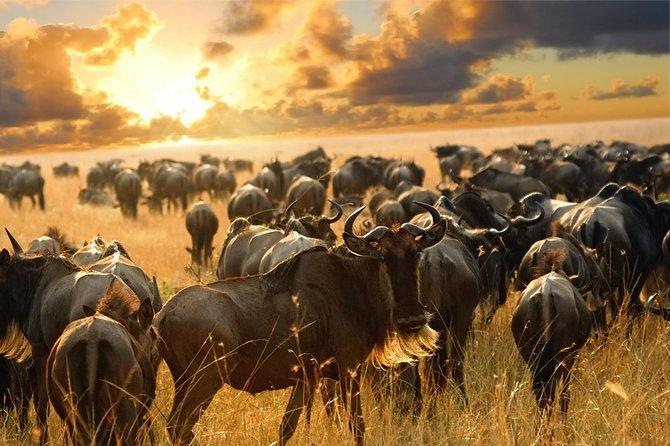 7-Days Best of Tarangire, Manyara, Serengeti & Ngorongoro