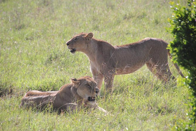 Half Day Nairobi National Park Guided Tour photo 9