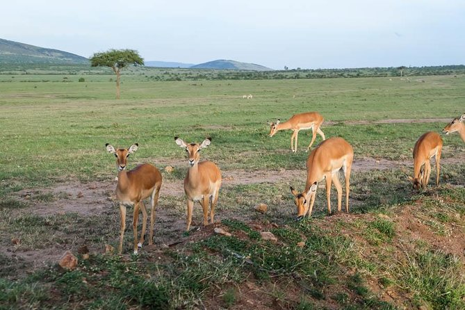 3 Days Masai Mara Budget Camping Safari Tour photo 3