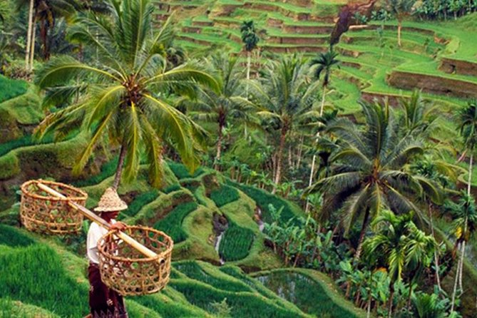 Full Day Ubud And Visit Kintamani for the beautiful view of Mount Batur
