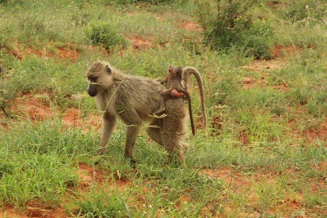 7 days safari Kenya Discovery