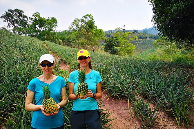 Private Tour - Pineapple Tour (Cultivations) photo 3