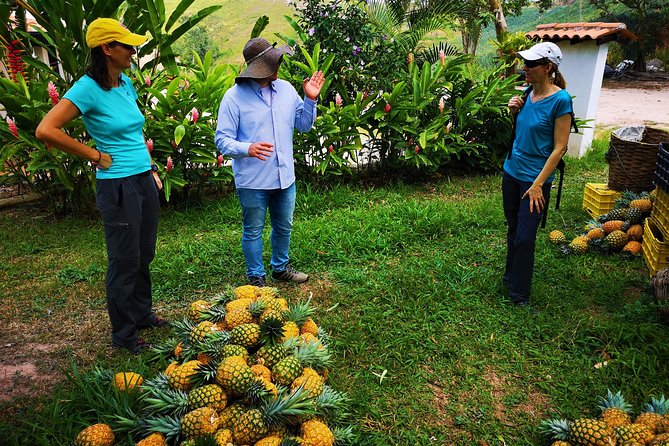Private Tour - Pineapple Tour (Cultivations) photo 8