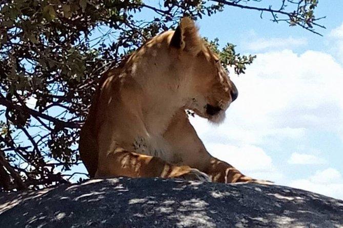 5 days lodge safari