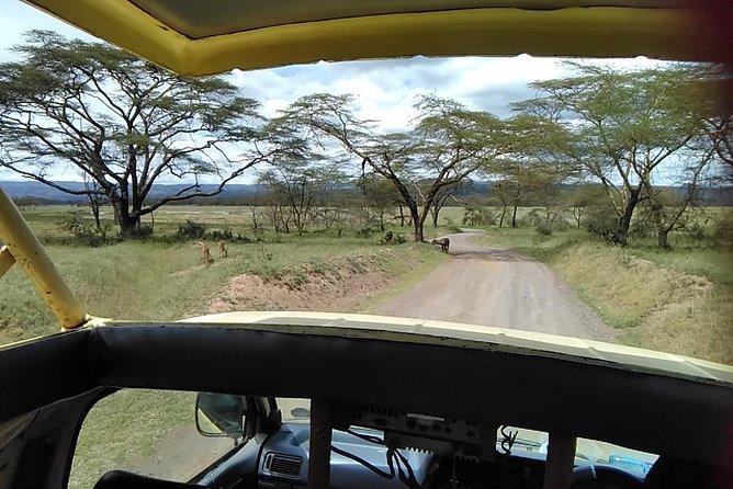 Private Day tour Nakuru National Park & Boat Ride