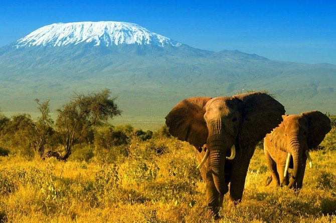 Game Drive Amboseli National Park Day Tour