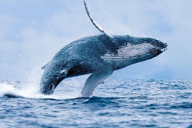 2-Hour Maui Whale Watching Cruise! (Ma'alaea Harbor)