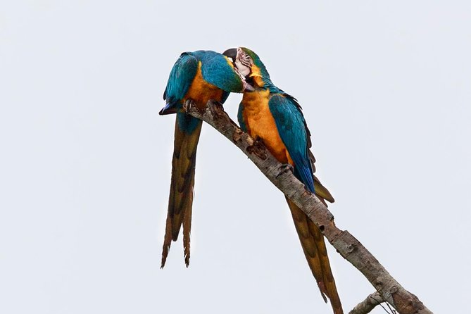 Macaw Collpa & Sandoval Lake 4 Days / 3 Nights