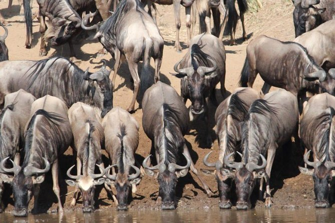8 Days Budget Safari in Tanzania and Kenya photo 6