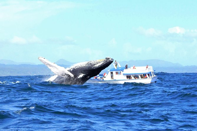 Whale Watching Day Trip From Punta Cana - Pick Up in Your Hotel. photo 3