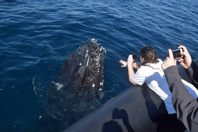 Whale Watching Day Trip From Punta Cana - Pick Up in Your Hotel. photo 7