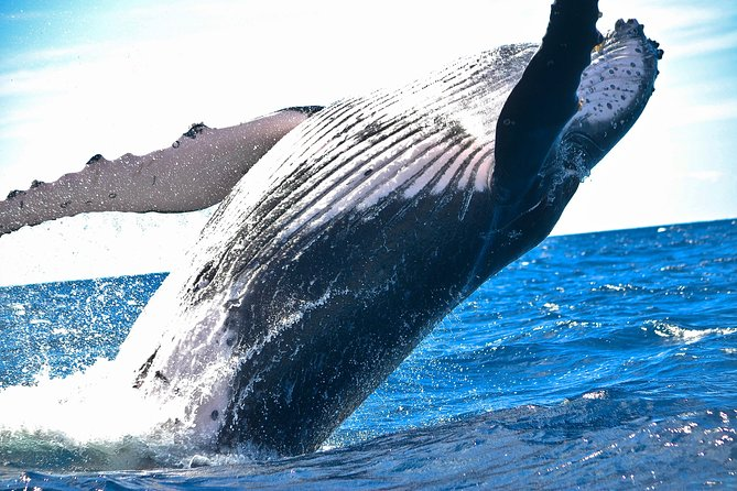 Whale Watching Day Trip From Punta Cana - Pick Up in Your Hotel. photo 4