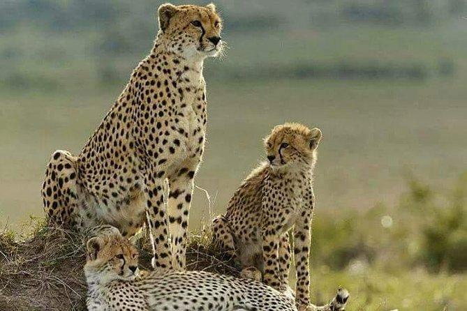 5 Day Tsavo [East & West] Amboseli & Taita Wildlife Park Safari Expedition