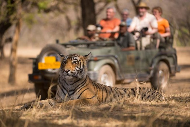 Private Tour: 3-Days Ranthambore Wildlife Safari Tour from Delhi