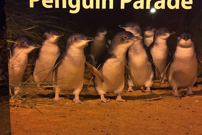 Private Full-Day Phillip Island and Penguins Tour from Melbourne photo 3