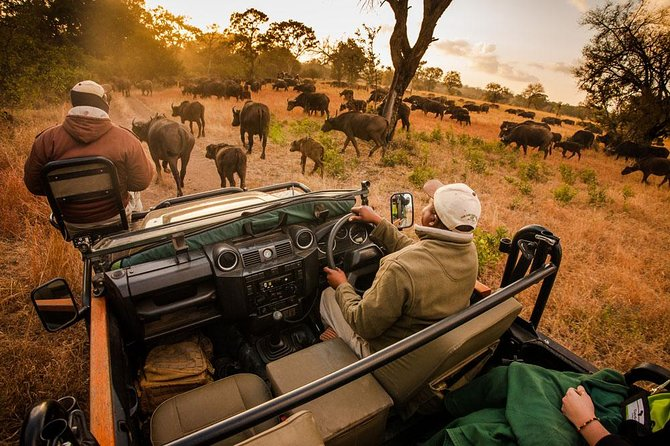 6 Days 5 Nights Budget Camping Safari