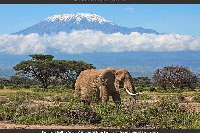 6 Days Masai Mara,lake Nakuru & Amboseli Private Camping Min 2 Pax