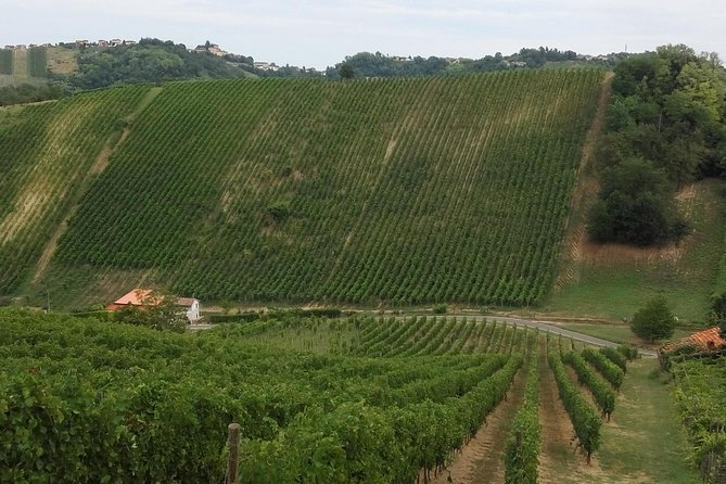 Bricco dei Roncotti wine tour & tasting