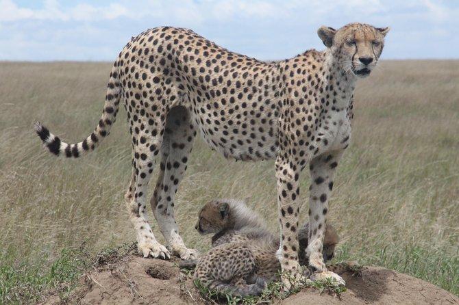 2 Days Tarangire and Ngorongoro Crater