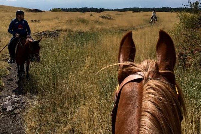 Etna Horse Riding Tour 1 Day