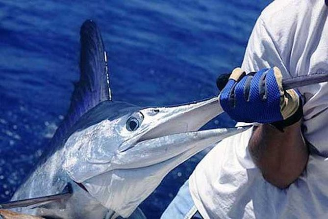 PRIVATE Deep-sea Fishing Experience - $490 PER GROUP (max 4 people)