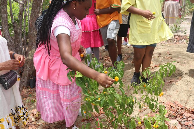 Authentic Garifuna Cultural & Culinary Adventure From Placencia