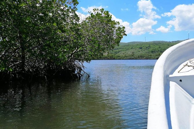 VIP tour to Paradise Island & The Mangroves