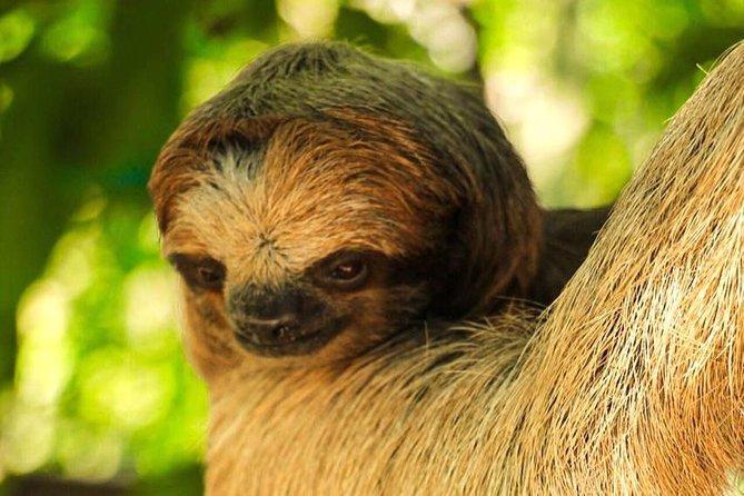 Roatan Monkey and Sloth Sanctuary