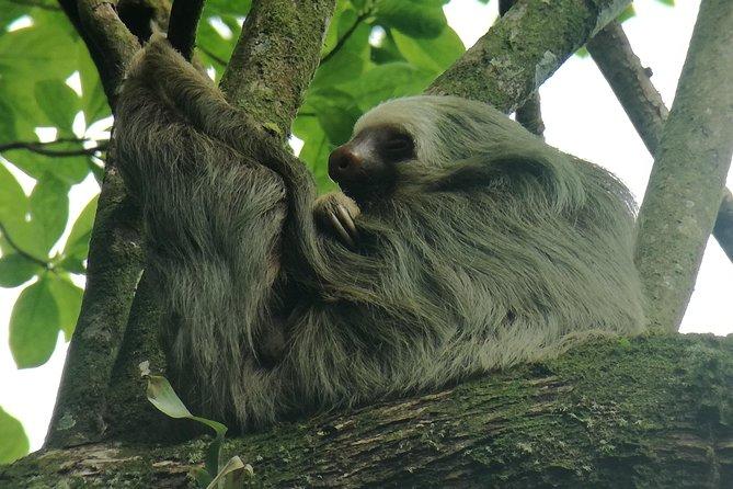 Sloth search