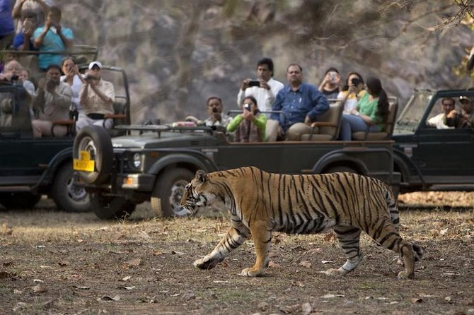 Ranthambore Safari private and group tour