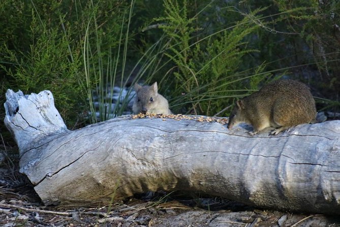 Nocturnal Wildlife Tour from Busselton or Dunsborough