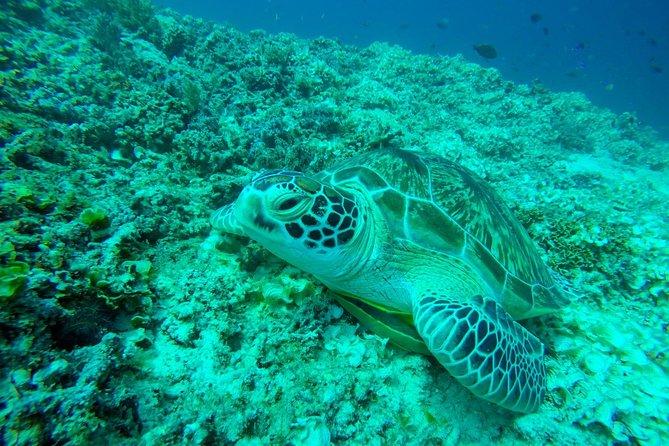 Snorkeling trip 3 gilis island