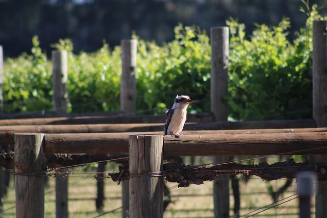 Margaret River Wine and Sights Discovery Tour from Busselton or Dunsborough