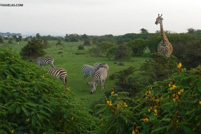Private Nairobi Day Trip To Crescent Island Game Park - Lake Naivasha photo 8