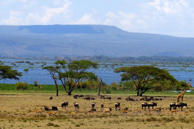 Private Nairobi Day Trip To Crescent Island Game Park - Lake Naivasha photo 9
