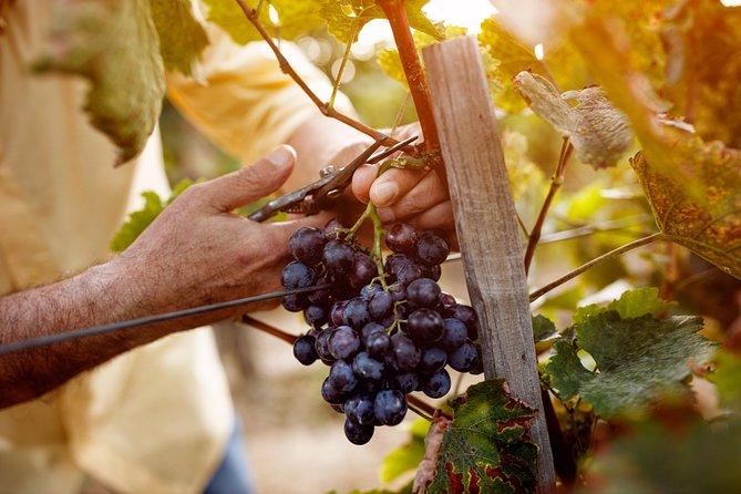 Romanian Wine Tasting