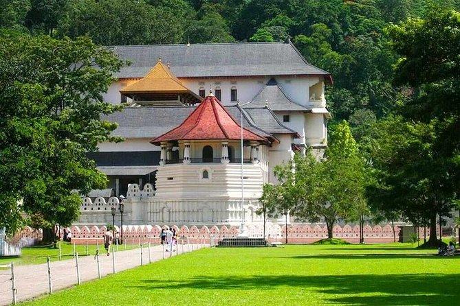 Kandy Day Trip from Colombo: Tea Factory- Peradeniya Botanical Gardens-Kandy