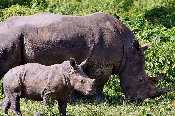 1 day ziwa Rhino sanctuary
