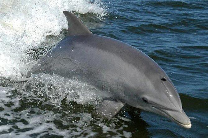 Orange Beach Dolphin Eco Boat Tour