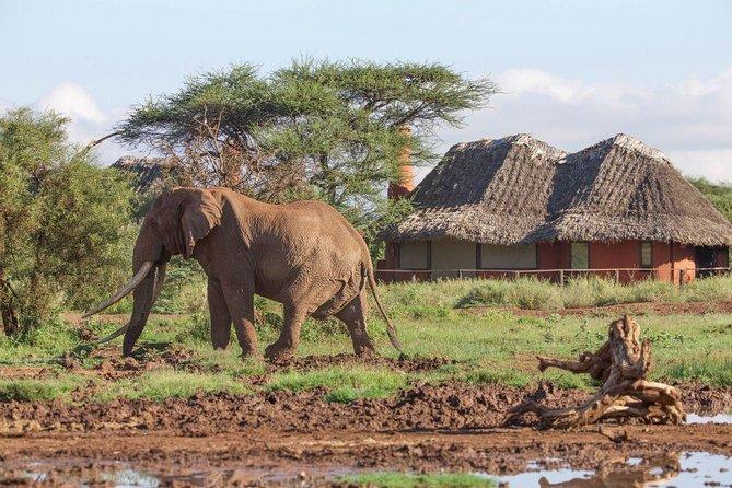 10 Day - Amboseli, Naivasha, Mara, Nakuru & Aberdares Safari
