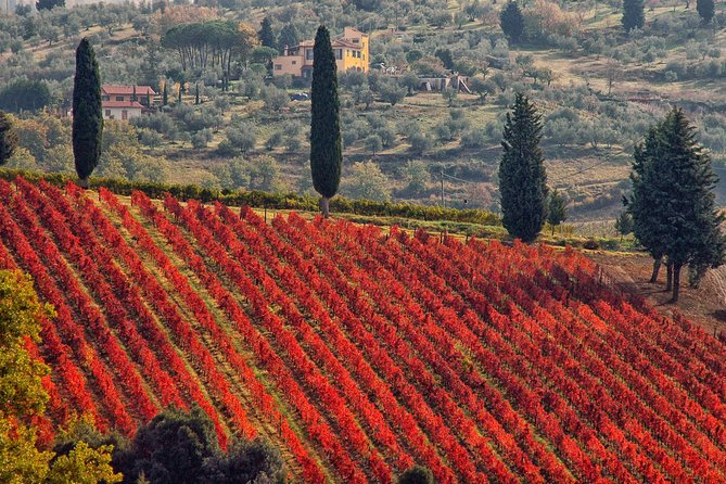 Exclusive private tour: Chianti wine and the History of Florence