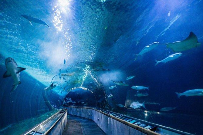 Nature Lover's Experience: Muir Woods Tour met aquariumbezoek