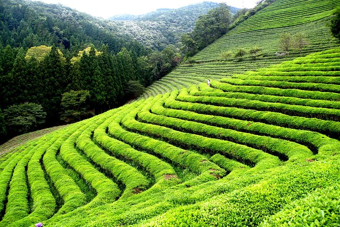 Cruise Ship Shore Excursions - Colombo Port - Ceylon Tea Tour