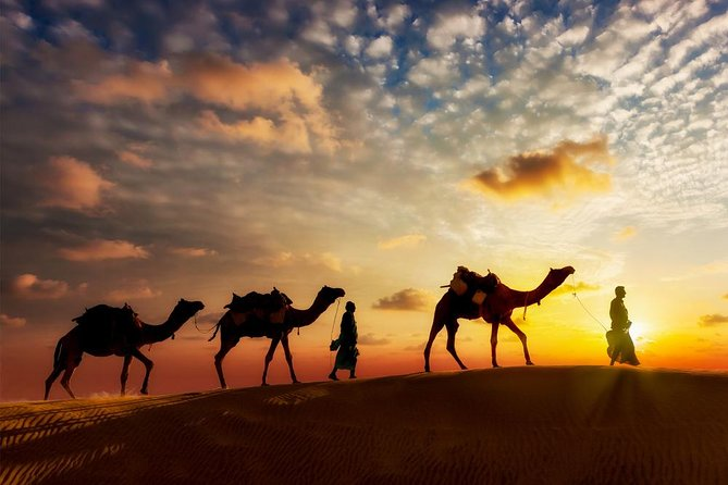 Camel Safari in Jaisalmer - With and Without Camp Stay
