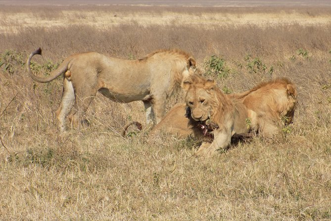 4 Days Tanzania Wildlife Safari (Lake Manyara, Ngorongoro Crater and Serengeti)