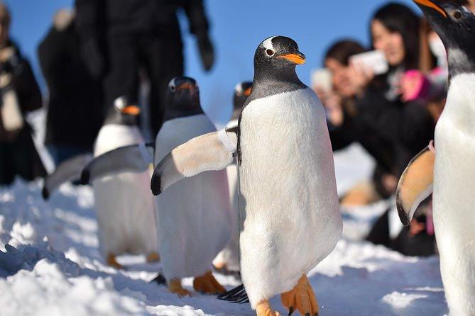 Winter Tour of Otaru Canal, Otaru Aquarium and Shiroi Koibito Park