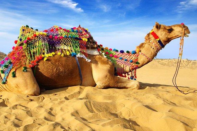 Dinner at Dunes with Camel Safari, Jodhpur