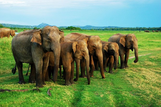 Udawalawa National Park Day Tour