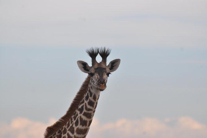 3 Days Amboseli National Park--Kilimanjaro. JEEP SAFARI