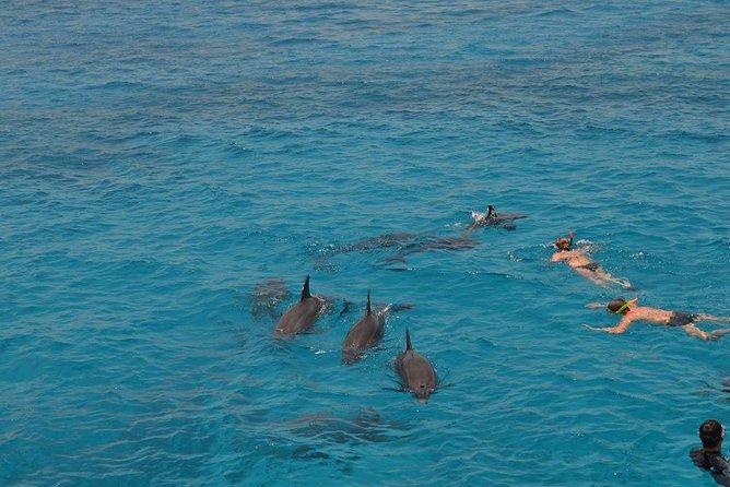 Dolphin House sea trip